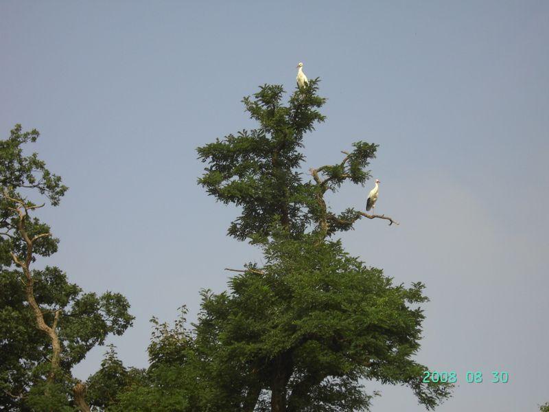 Planckendael 30 augustus 2008 12