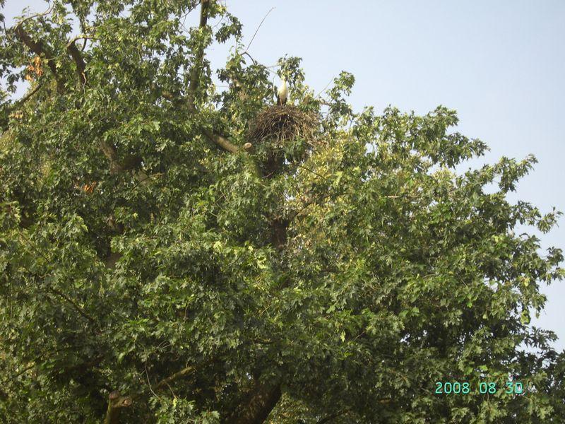 Planckendael 30 augustus 2008 14